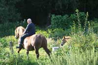 reiten in masuren